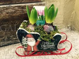 Arrangement Vianočné kvetinové sane